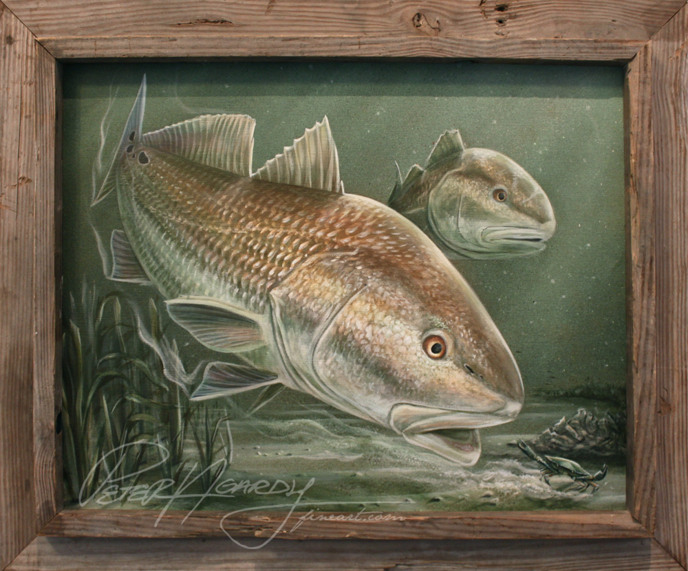 redfish art, redfish painting