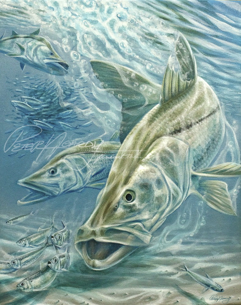 Snook painting, Linesider, Snook, Pilchard